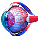Eye Anatomy 3D